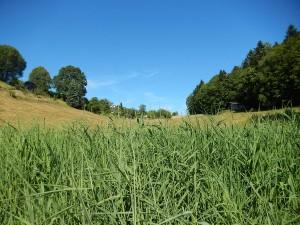 paysage-prairie-saulcy-suisse